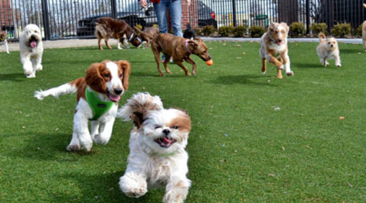 Come aprire una pensione per cani
