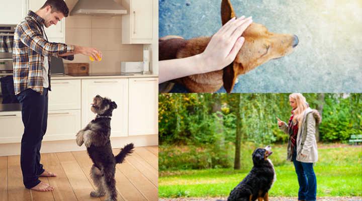 come diventare Addrestratore Canino