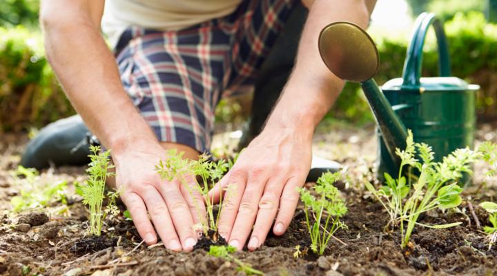 Creare un'impresa di giardinaggio