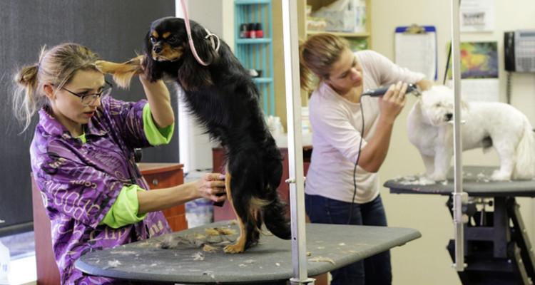 Diventare parrucchiere per cani e gatti