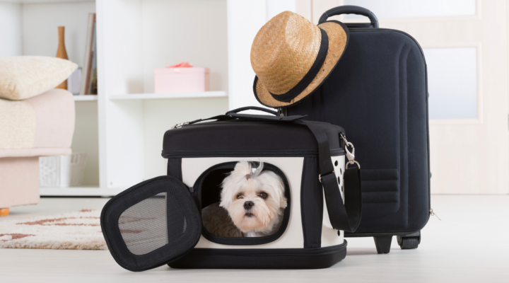 Luoghi in cui Viaggiare con il tuo Animale Domestico